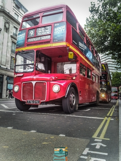 Buses and Cars